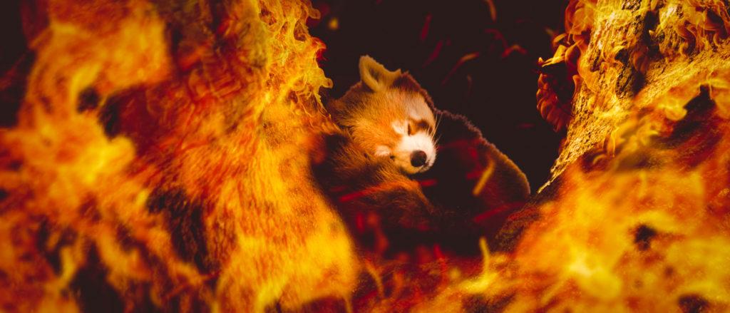 Fire by Stuart Vivian, Photography Scavenger Hunt