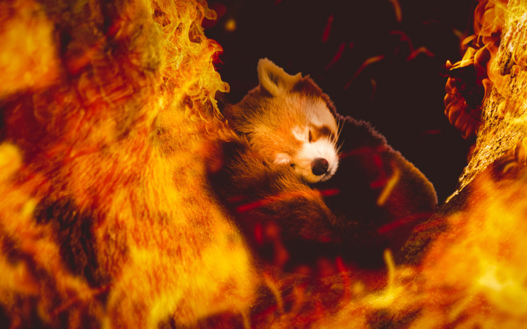 Firefox Behind the Scenes by Stuart Vivian