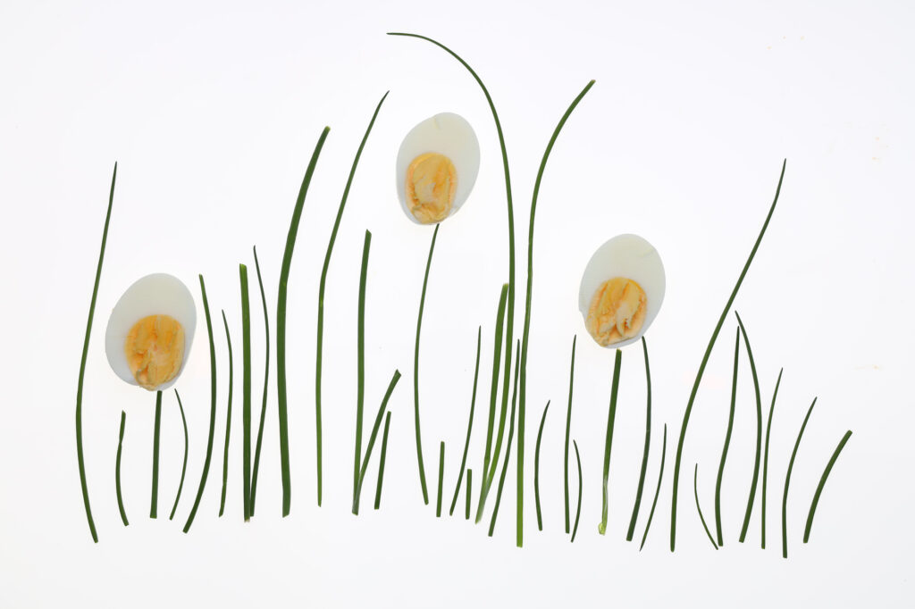 grass with flowers made from half a hard boiled egg, photograph by Carla McMahon