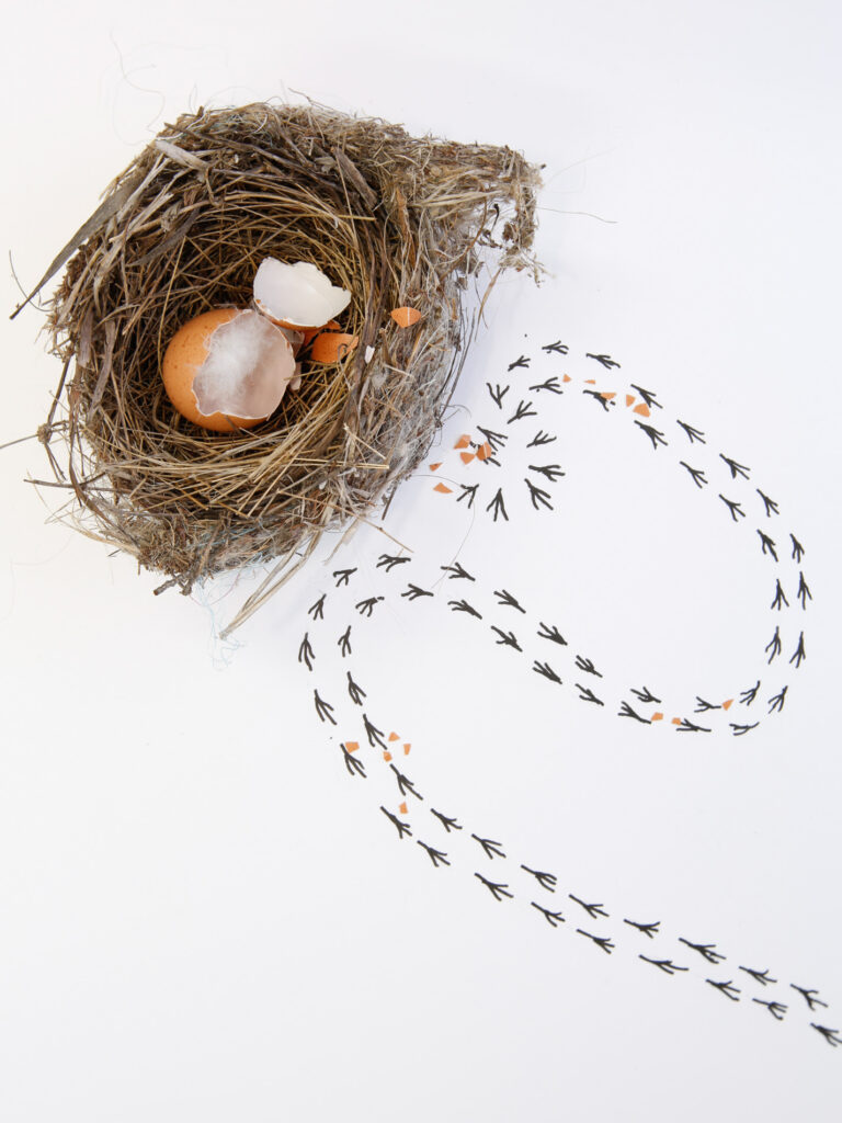 nest with egg shell and bird tracks leading away