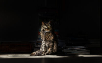 Round 31 Category Winners – Fluffy
