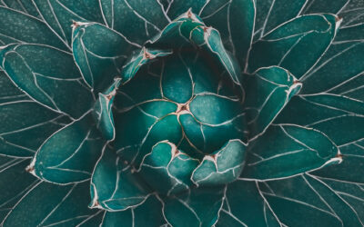 Round 31 Category Winners – Teal