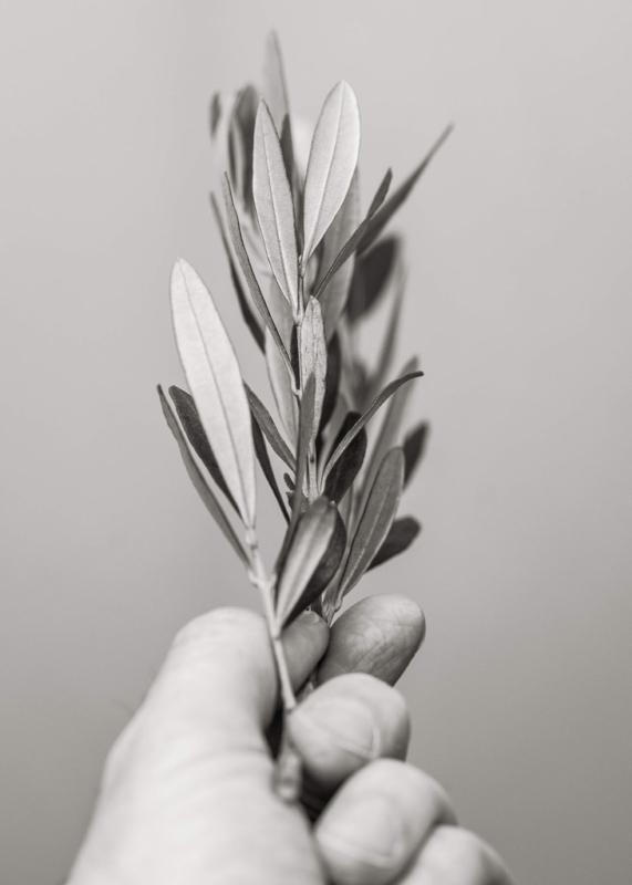20181117-olive by Stuart Vivian