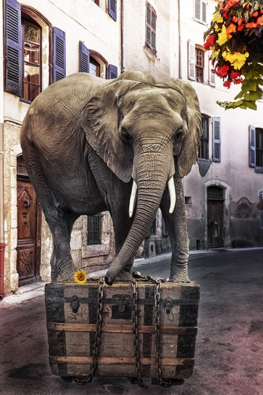 20181117-trunk by Mary Presson Roberts