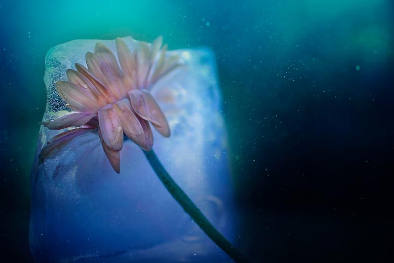 ice by kimberton