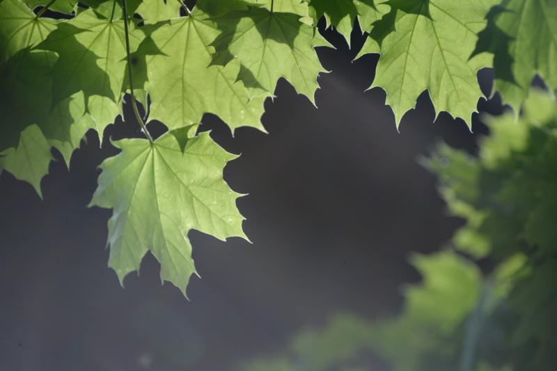 Leaf-by-Angie-SmithHM by Sandra Parlow