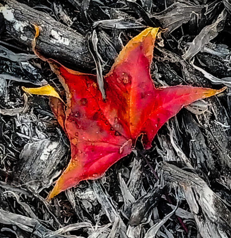 Leaf by maureen roberson