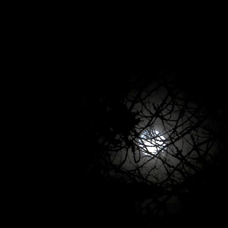 Moon by Elaine Mattson
