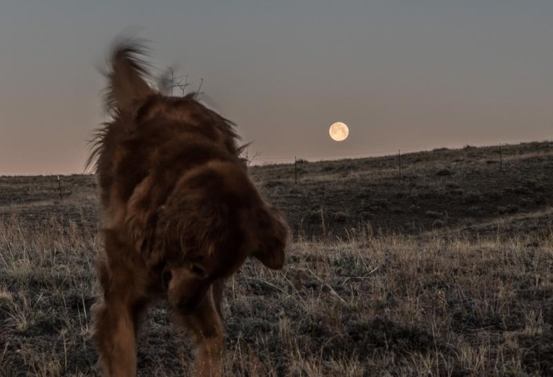 Moon by Kathy Milks