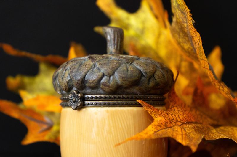 acorn by elizabeth lund