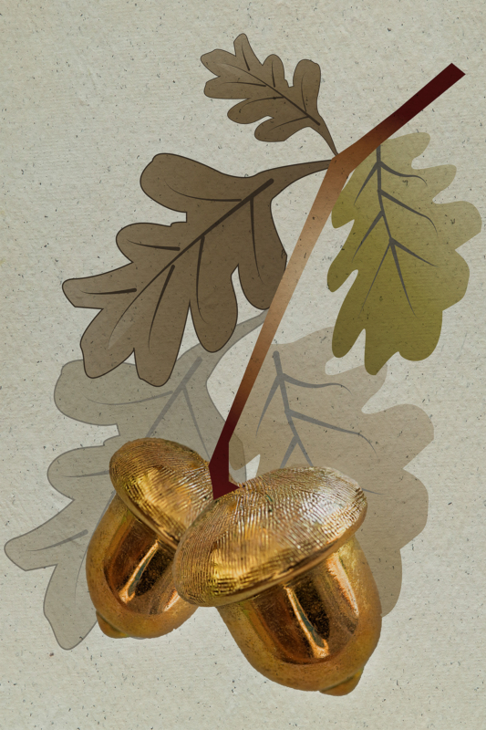 acorn by jamuna burry