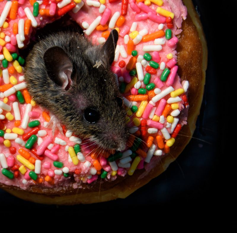 donut-by-chris-goldthorpe3rd by Sandra Parlow