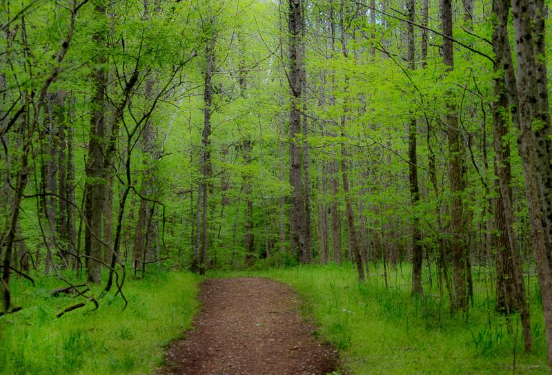 green by carrie fleitz