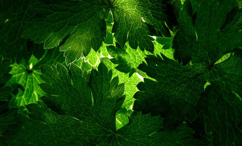 green by chris goldthorpe