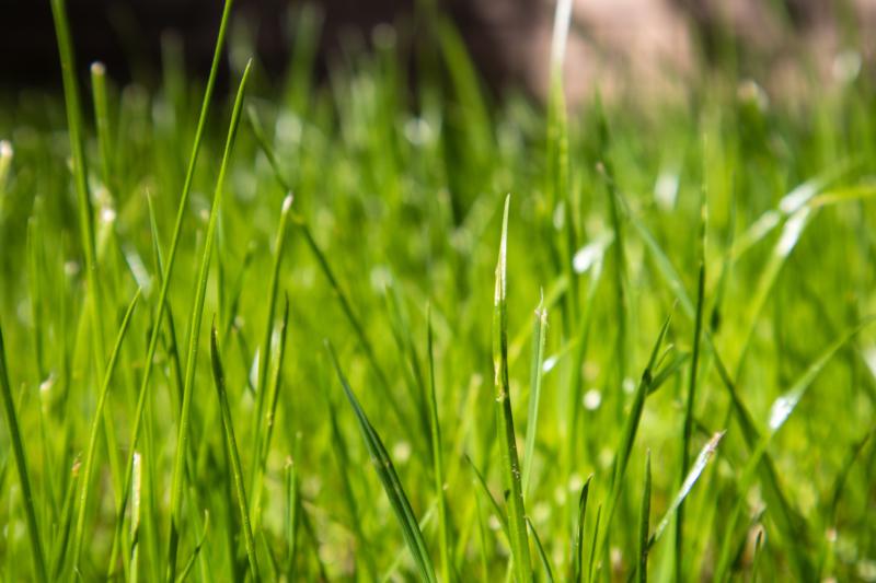 green by dan mcmanus