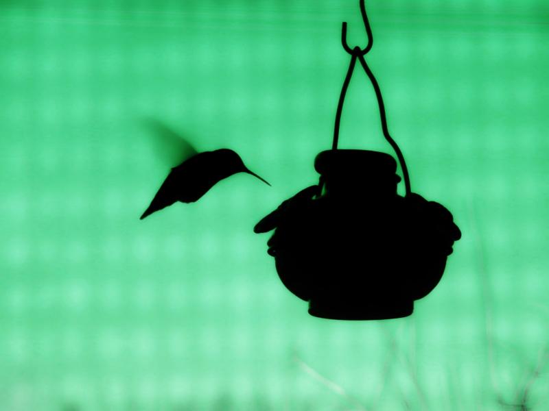 green by julie mattson
