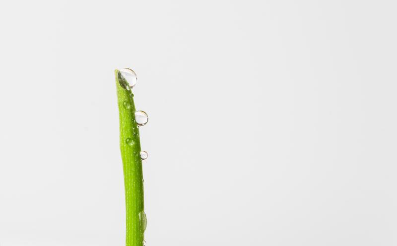 green by marjorie mcdonald