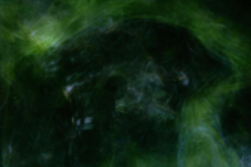 green by matt austin