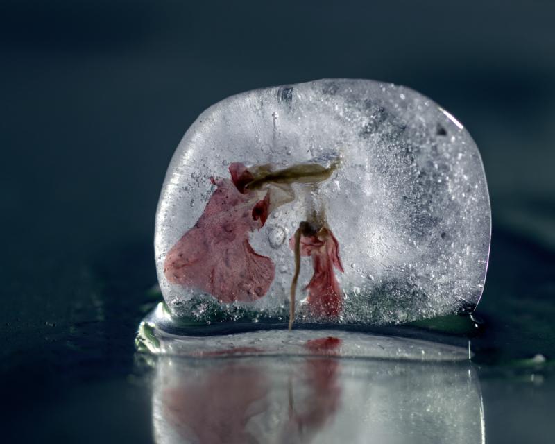 ice by Alan Mason