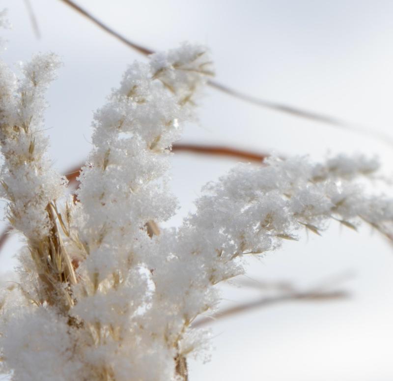 ice by byron sheldrick