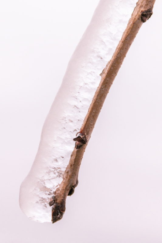 ice by heather szarka
