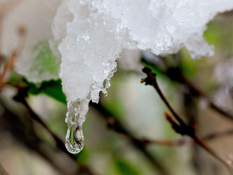 ice by linda reitz