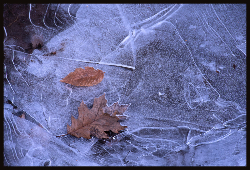 ice by lisa long