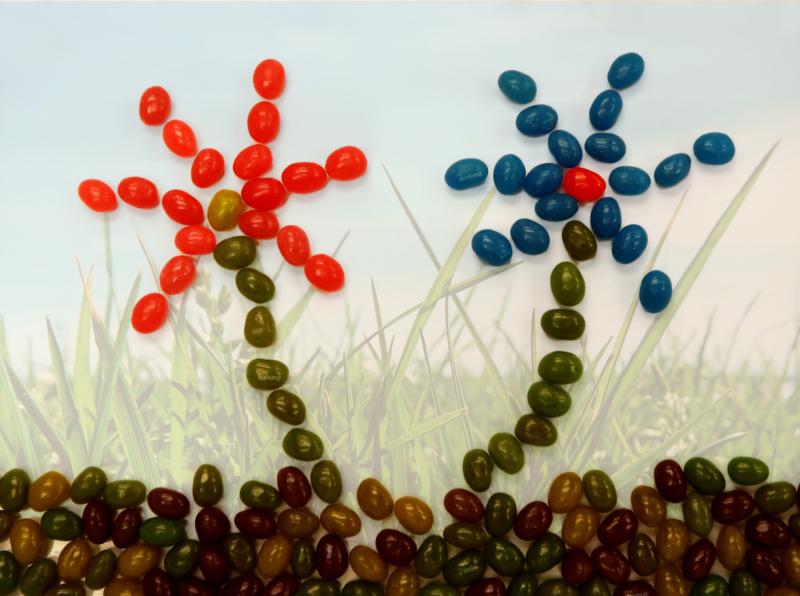 jellybean-by-sandy-sutherlandHM by Rita Zietsma