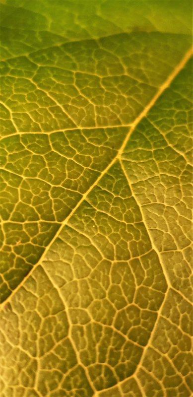 leaf by Cindy Telley.jpg