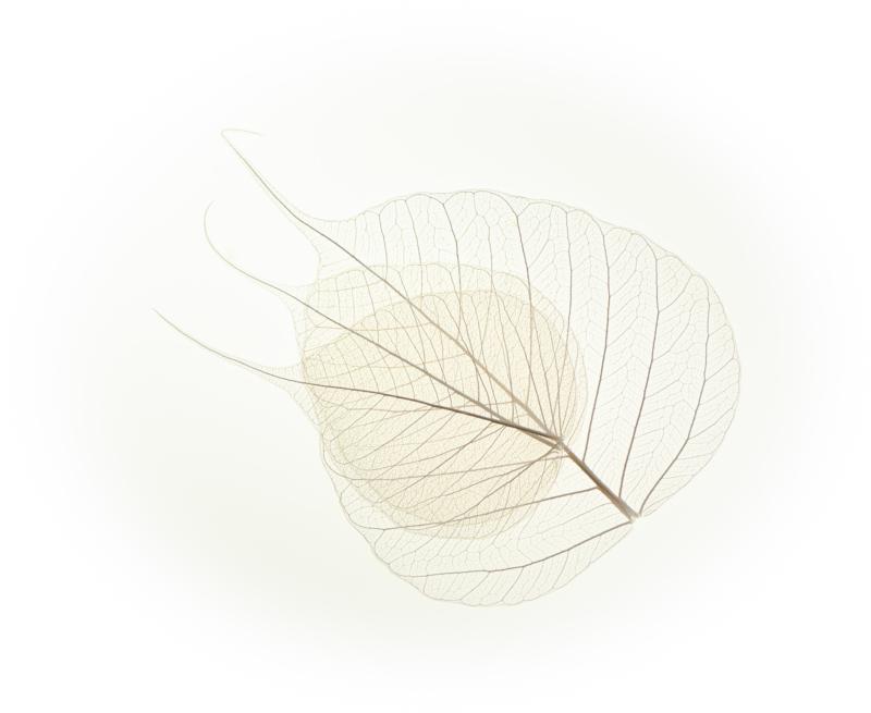 leaf by Rebecca Hagberg