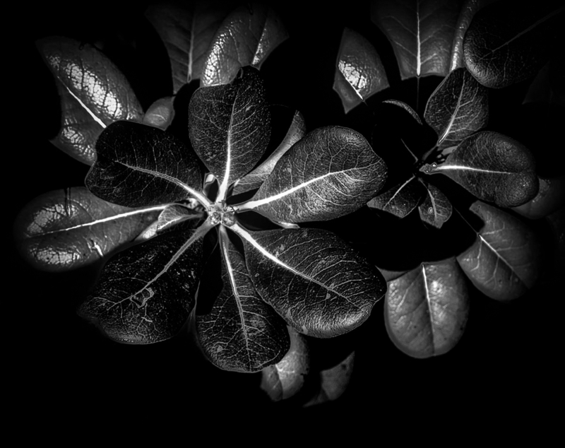 leaf by ande s