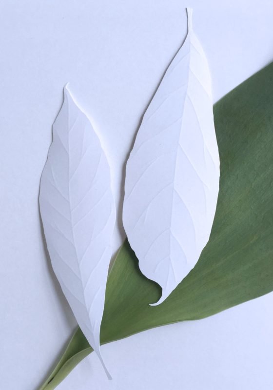 leaf-by-cooper-burgess1st by Robin Griggs Wood