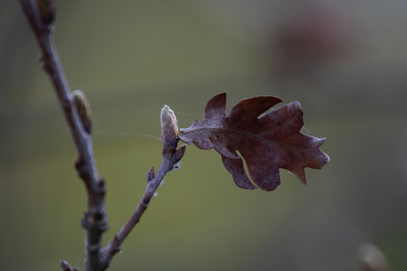 leaf by d taylor