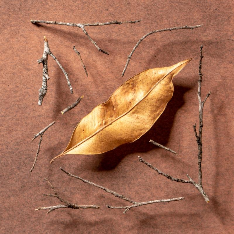 Leaf by eric raeber