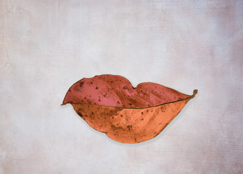 leaf by jamuna burry