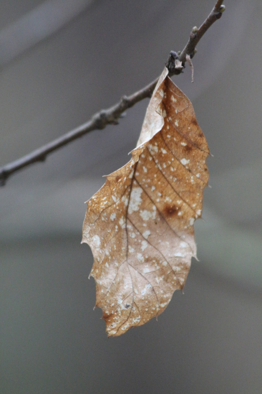 leaf by justin hawkins
