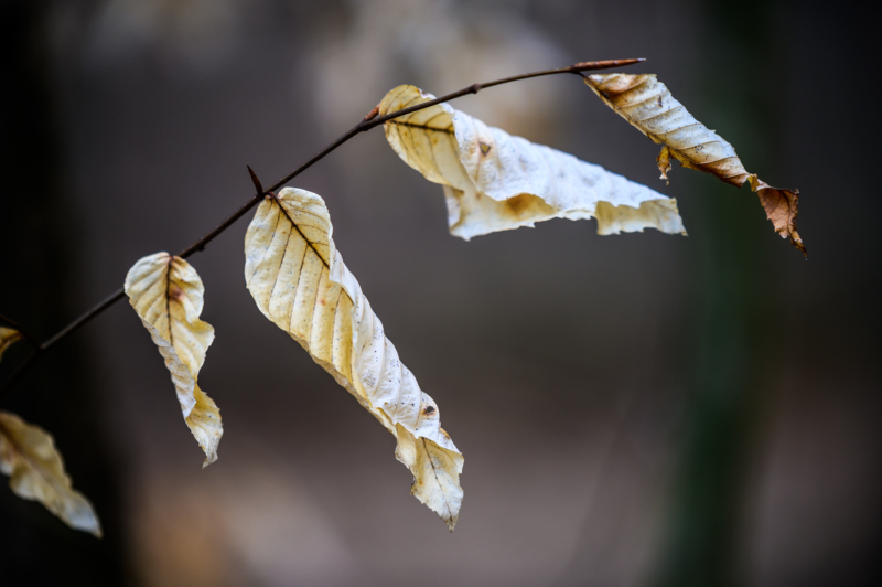 leaf by klint krebs