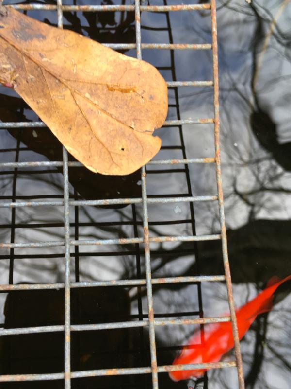 leaf by lori alexander.jpg