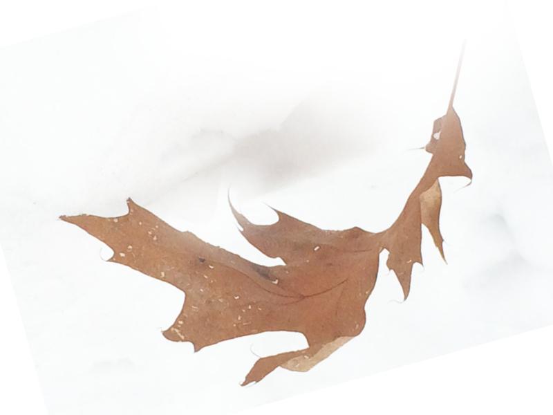 leaf by marcia borell