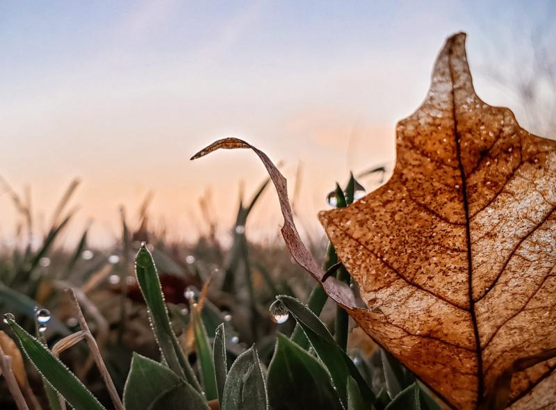 leaf by melissa leda