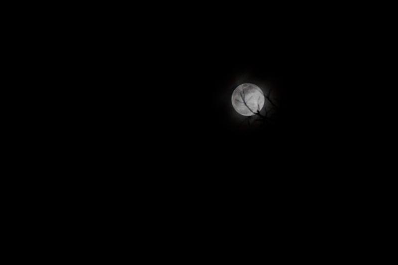 moon by allen firstenberg