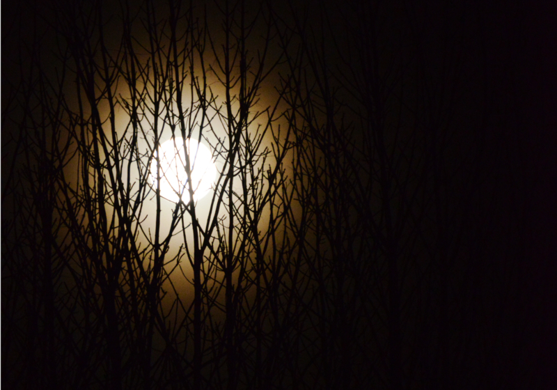 moon by bridget m