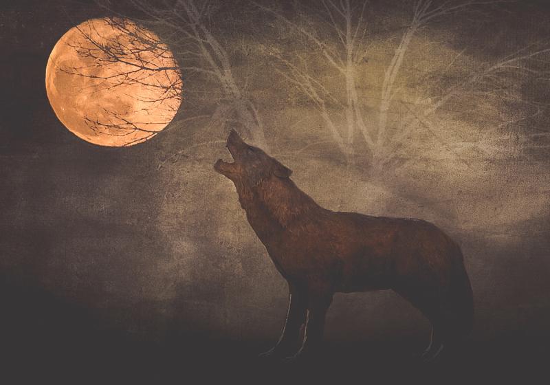 moon by dana finster