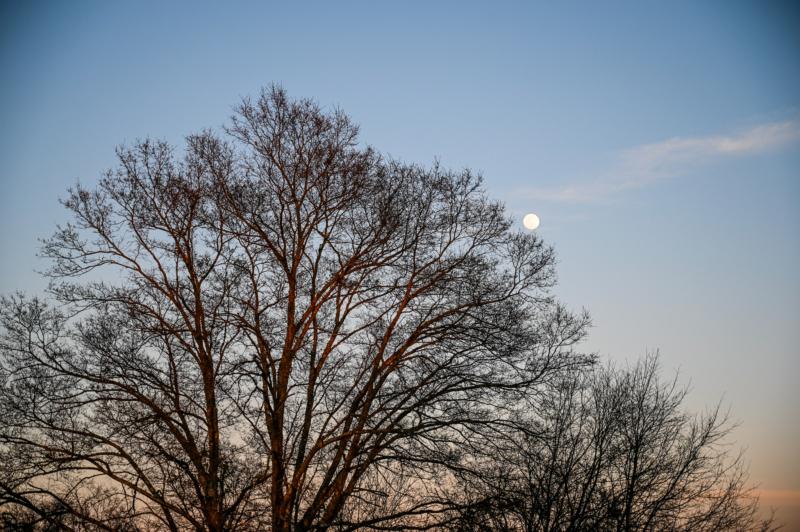 moon by ginnie lerch