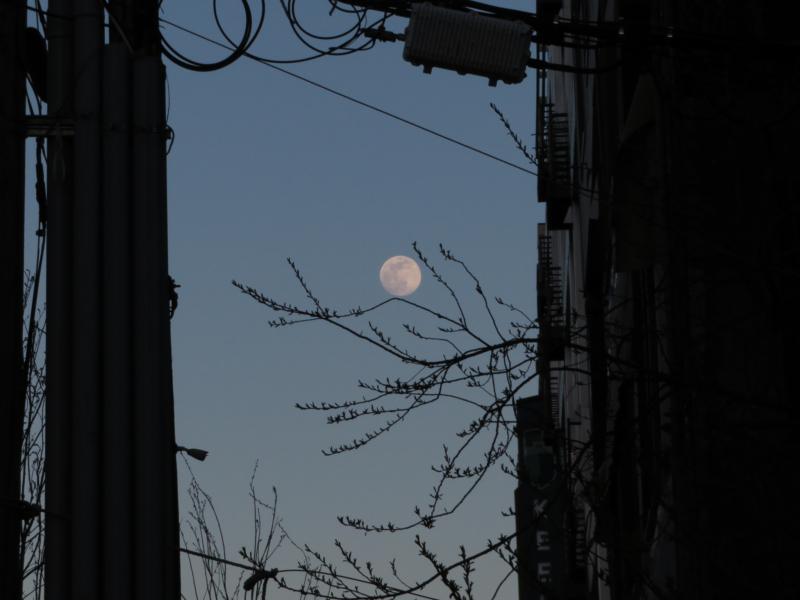 moon by julie mattson