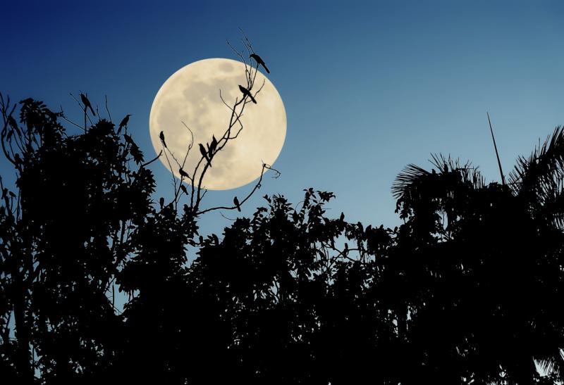 moon by patt dickson