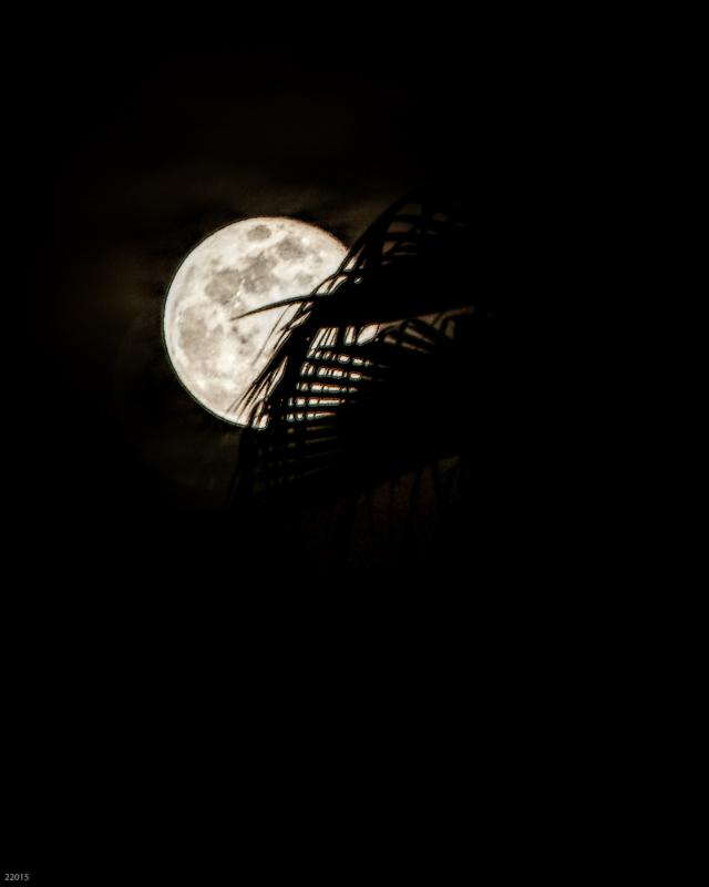 moon by sandra nesbit