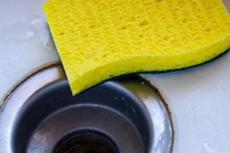 sponge by dan mcmanus