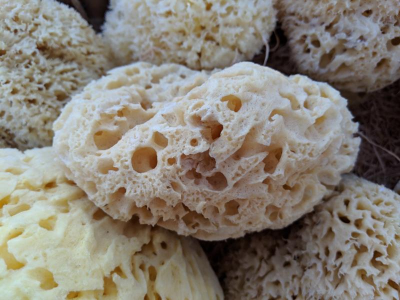 sponge by penny kerr