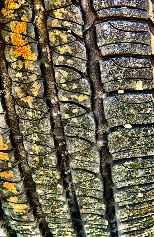 tire by cindy verry